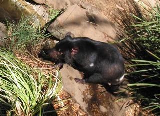 動物を保護する ボノロング 野生動物公園にて~_e0098241_10453947.jpg