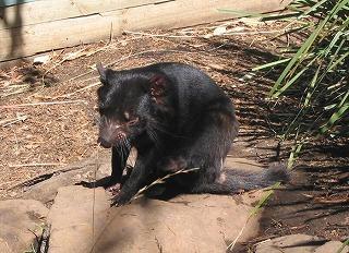 動物を保護する ボノロング 野生動物公園にて~_e0098241_1045626.jpg