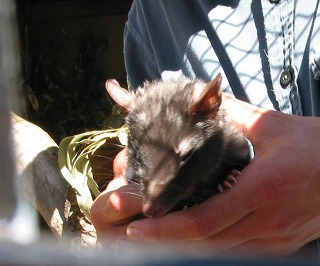 動物を保護する ボノロング 野生動物公園にて~_e0098241_10473292.jpg