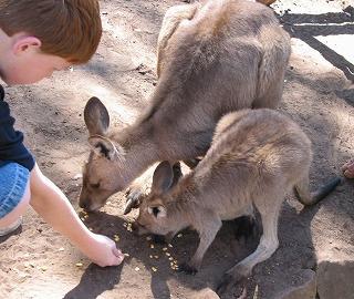 動物を保護する ボノロング 野生動物公園にて~_e0098241_1048345.jpg