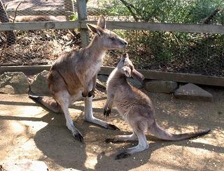 動物を保護する ボノロング 野生動物公園にて~_e0098241_10492458.jpg