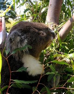 動物を保護する ボノロング 野生動物公園にて~_e0098241_10494790.jpg