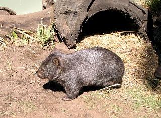 動物を保護する ボノロング 野生動物公園にて~_e0098241_1051930.jpg