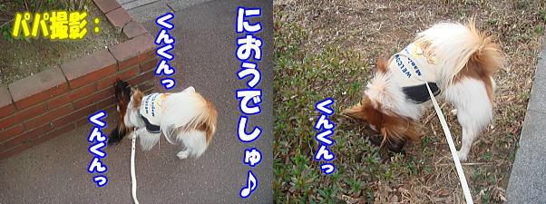 f0011845_0153181.jpg