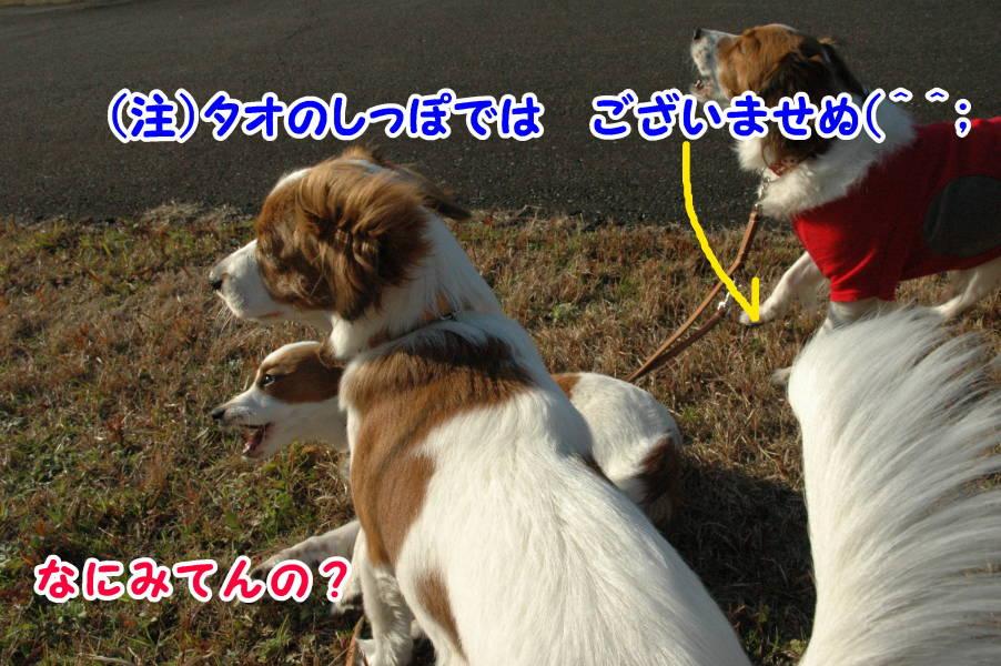 c0075585_1164597.jpg