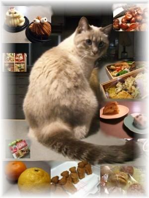 ネコの超能力_c0006826_795730.jpg