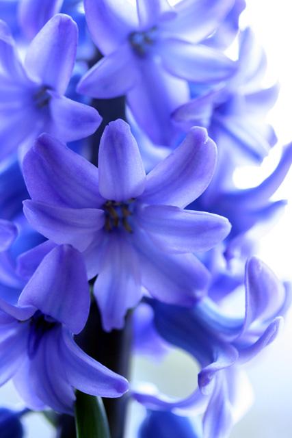 春のかほり_e0046147_2142473.jpg