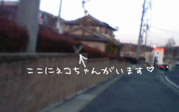 c0011766_18271390.jpg