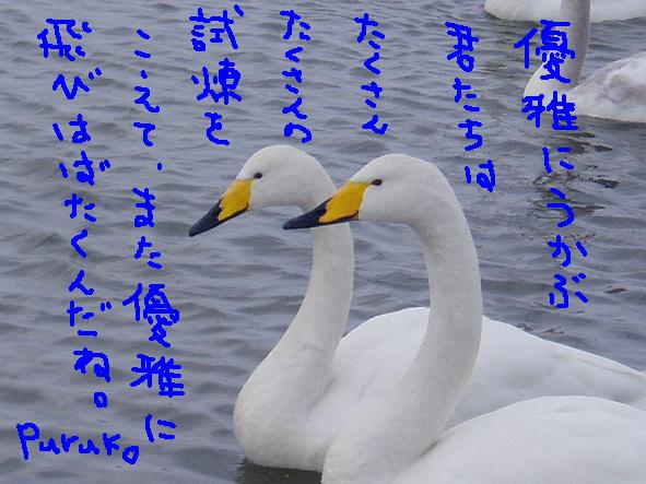 f0116384_15595584.jpg