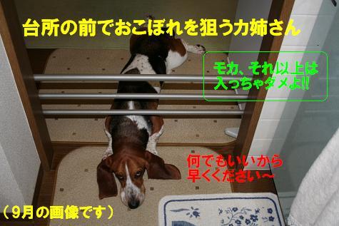 f0121712_16144040.jpg