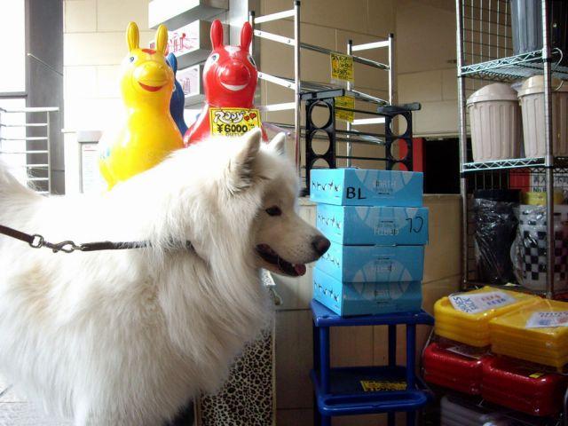 探偵犬クロ_c0062832_1631179.jpg