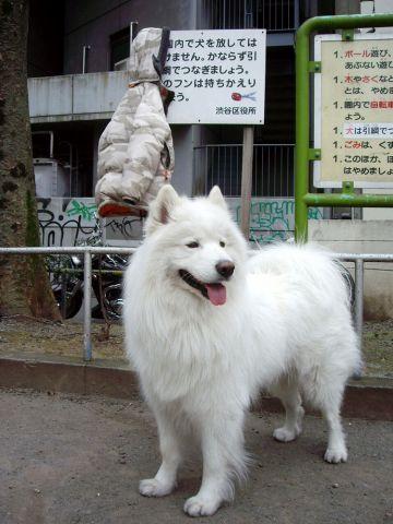 探偵犬クロ_c0062832_1631333.jpg
