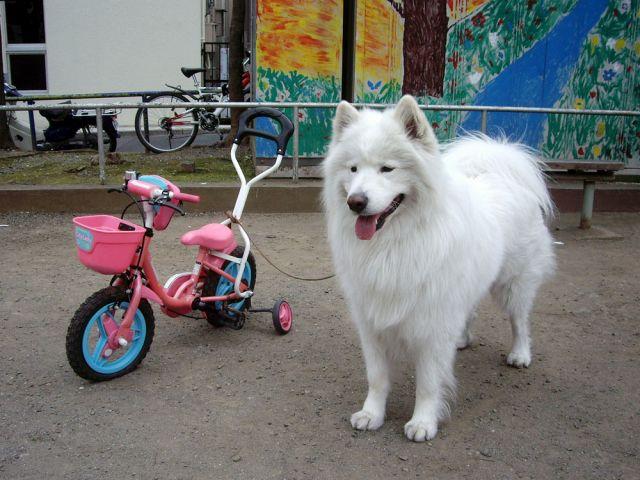 探偵犬クロ_c0062832_16314125.jpg