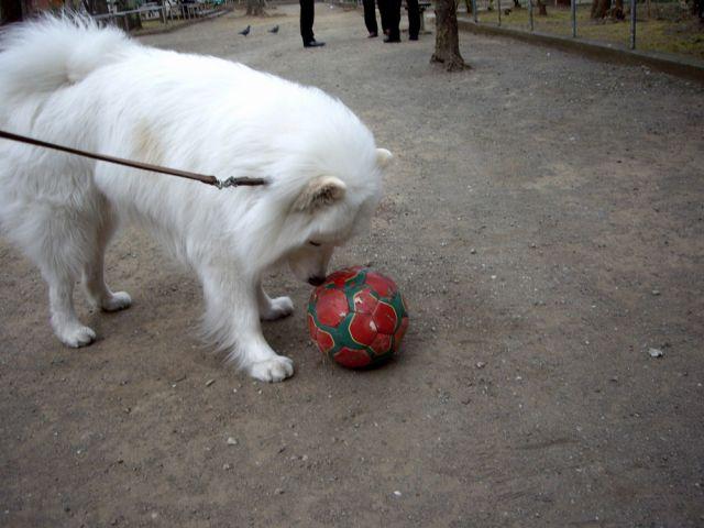 探偵犬クロ_c0062832_16314991.jpg