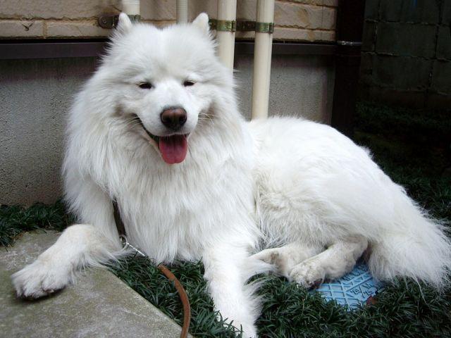 探偵犬クロ_c0062832_16315915.jpg