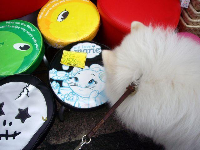 探偵犬クロ_c0062832_16319100.jpg