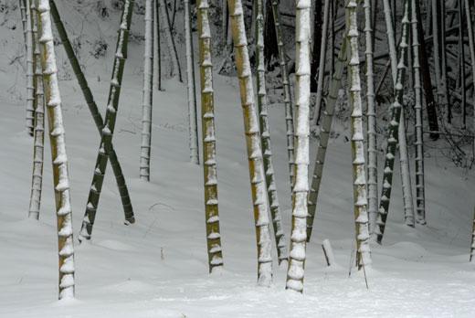 雪景色Ⅶ_c0093046_653348.jpg