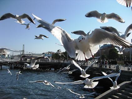 休日の横浜(横滨的假日)_f0056261_17503322.jpg