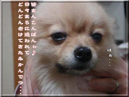 b0078073_17382314.jpg