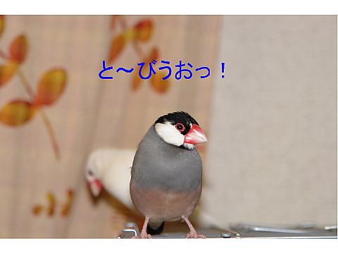 a0019545_2238124.jpg