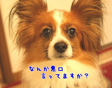 d0013149_052167.jpg