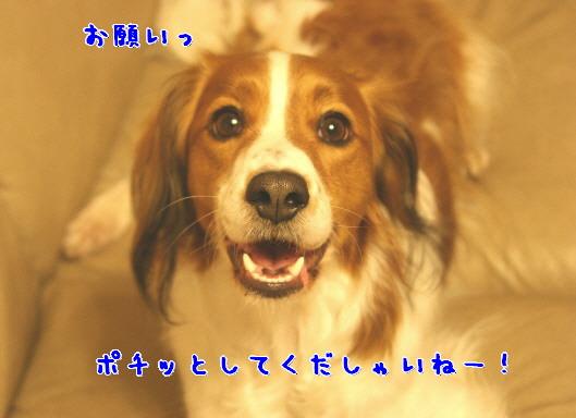 d0013149_154643.jpg
