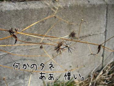 f0043658_12535289.jpg