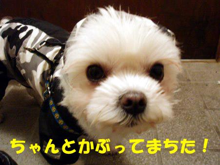 b0060071_048411.jpg