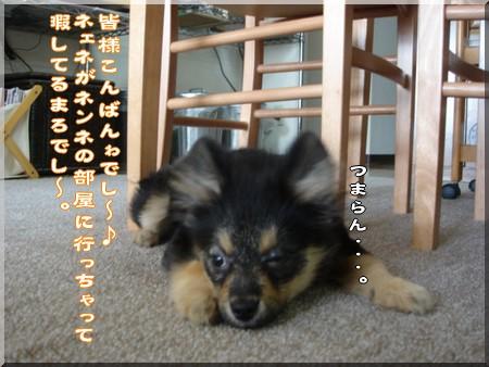 b0078073_17172231.jpg