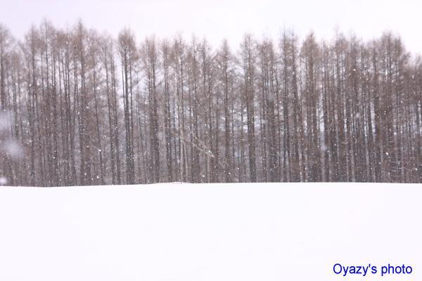 雪_a0071514_172344100.jpg