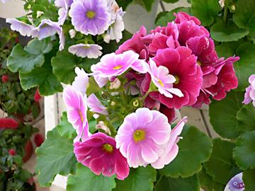 春 春 春_c0069048_6121764.jpg