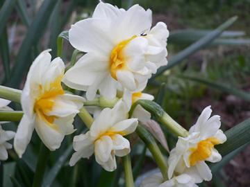 春 春 春_c0069048_613476.jpg