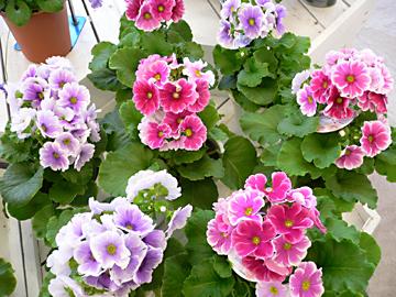 春 春 春_c0069048_69232.jpg