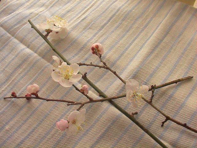 梅の花。_e0060555_15555382.jpg