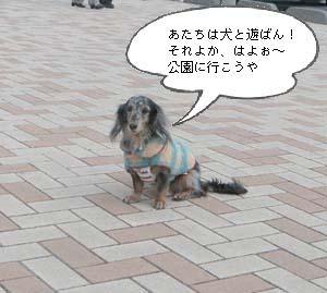 d0020869_2010637.jpg