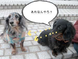 d0020869_2011067.jpg