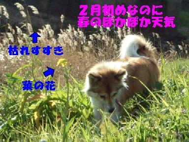 c0025171_16463159.jpg