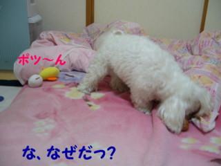 f0005727_16411385.jpg