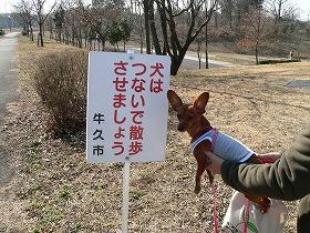リードは犬とあなたを守ります。_a0091865_16201325.jpg