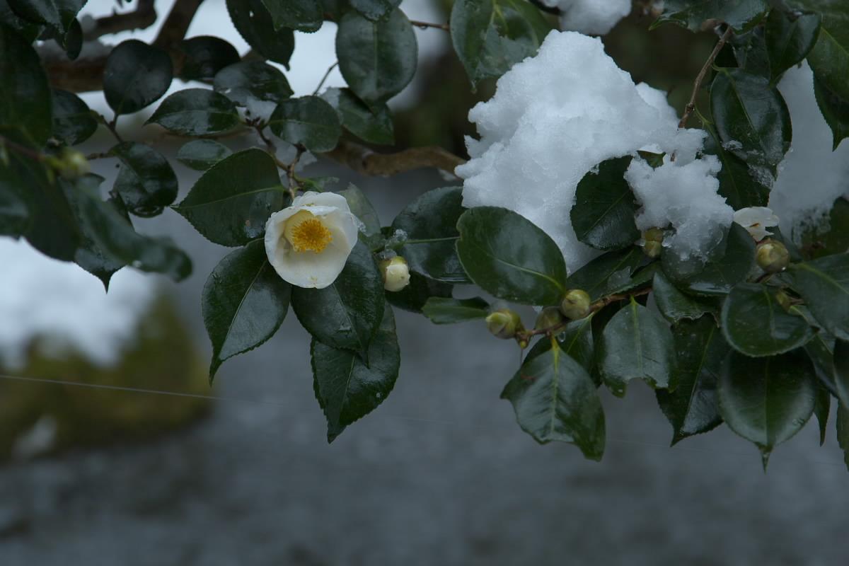 京都 大原 <三千院> 雪景色 16_f0021869_23411782.jpg