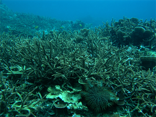 2/11 サンゴ礁モニタリング_a0010095_19141514.jpg