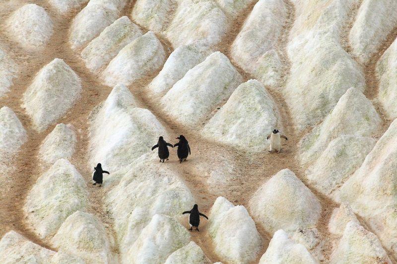 ふしぎ大陸 南極を見に行こう_c0025115_22375860.jpg