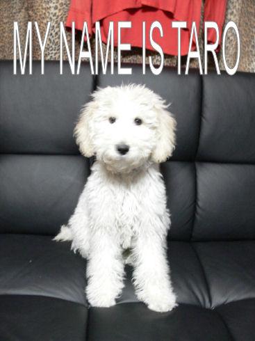☆RESEVOIR DOGS☆_e0083143_044379.jpg