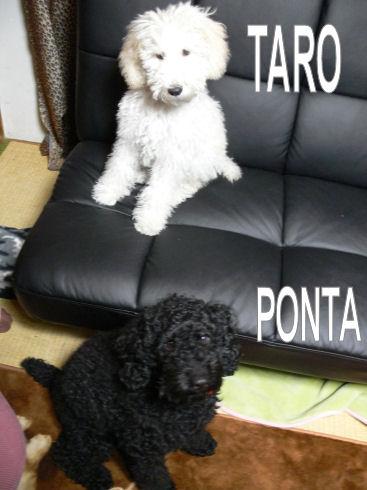☆RESEVOIR DOGS☆_e0083143_045475.jpg