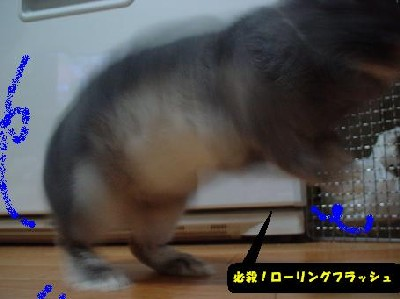 f0104057_19175988.jpg