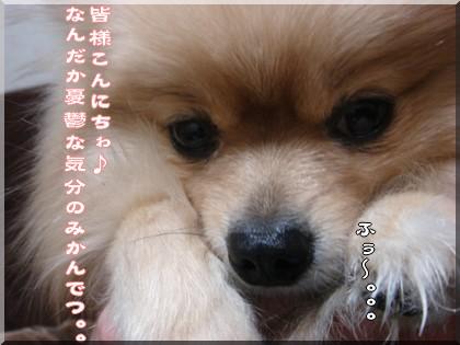 b0078073_15483531.jpg