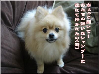 b0078073_15543076.jpg