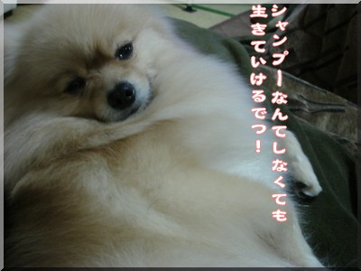 b0078073_15553732.jpg