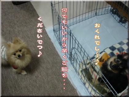 b0078073_160619.jpg