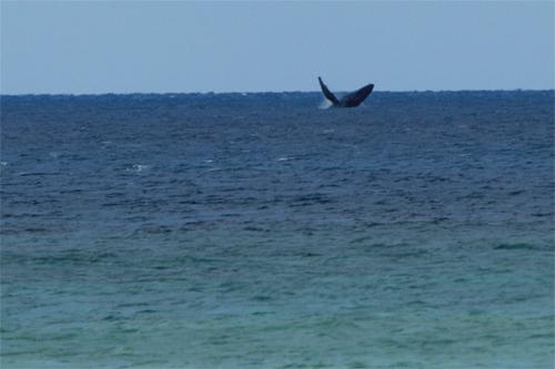 2/13 大浜でクジラ_a0010095_18144145.jpg